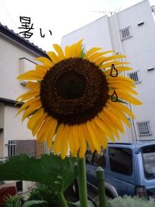 2010_0810_152235ca3c0494